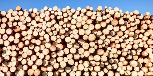 Dřevo nejen na dřevostavbu