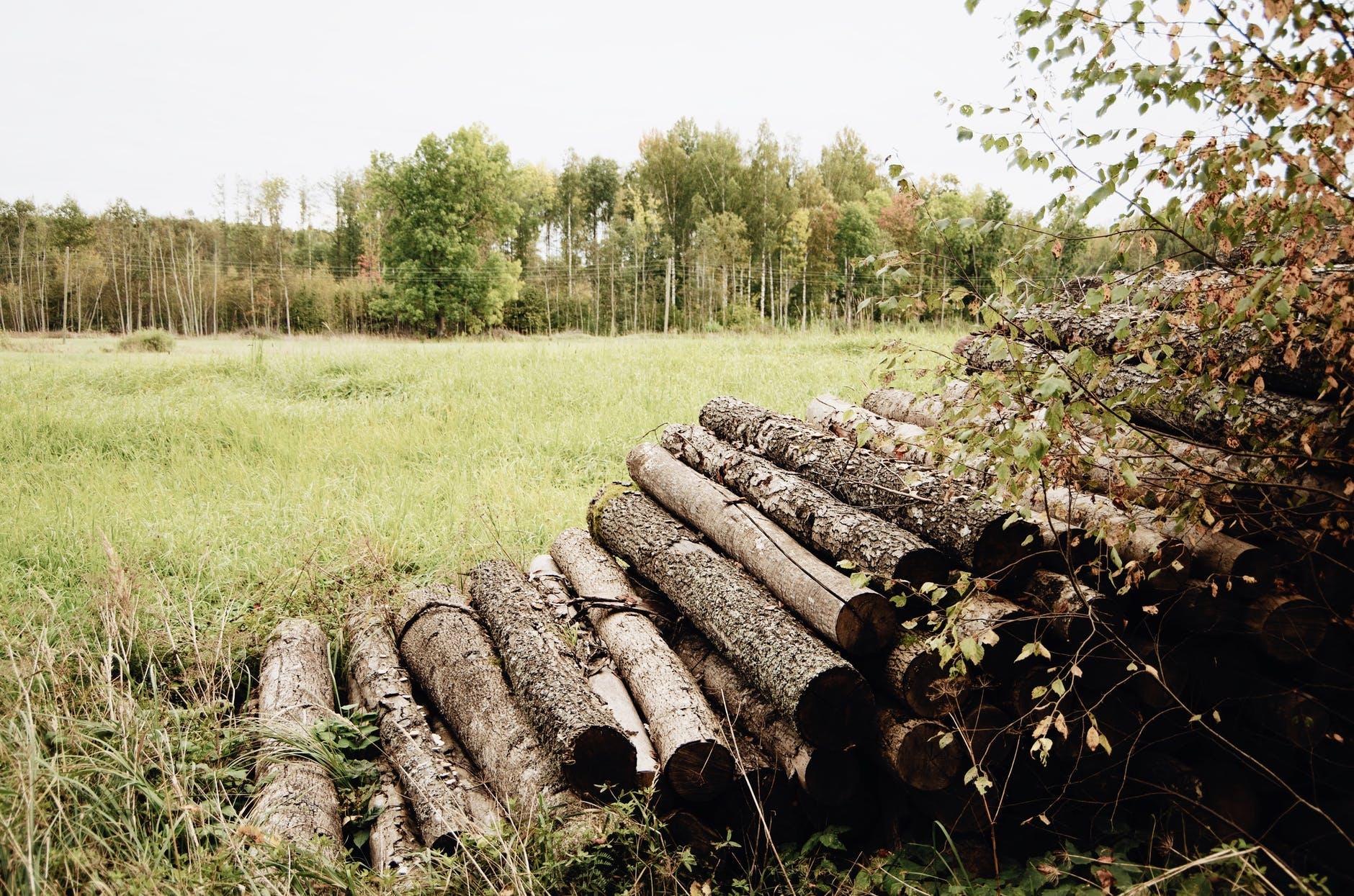 Lesy Mladá Boleslav vám pomohou stěžbou dřeva ale i se zalesněním